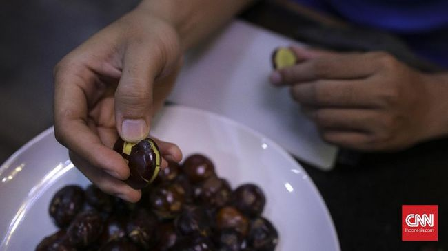 Jengkol menjadi salah satu makanan yang tidak disarankan dikonsumsi sebelum melakukan tes corona menggunakan alat GeNose. Apa saja manfaat jengkol?