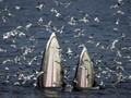 NYALANG: Hikayat Raksasa Penjaga Jantung Laut