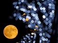 Mitos-mitos Gerhana Bulan dari Berbagai Negara