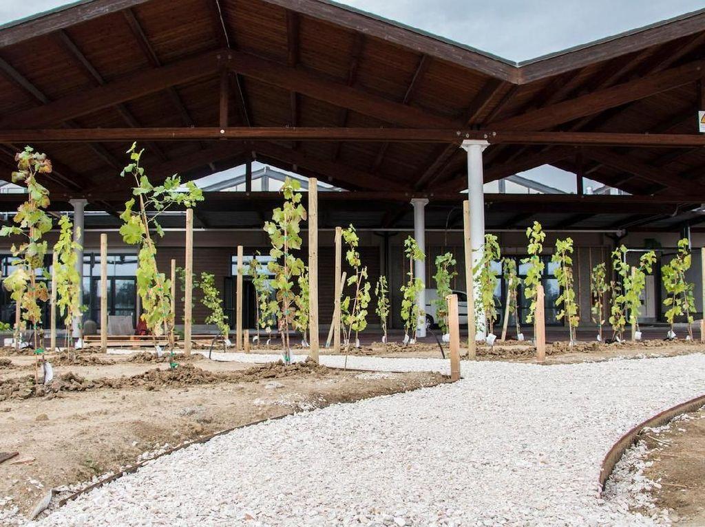 Tak ketinggalan, ada kebun anggur di sini. Jumlah wine di Eataly World ada 60 jenis lho! Foto: Istimewa