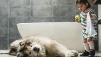 <div>Kamu ngapain tiduran di kamar mandi, Utah? ..(Foto: Instagram @malamutecalledutah)</div>