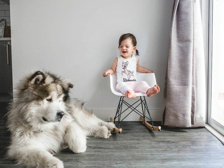 Cute maksimal. Bocah ini punya teman setia yakni seekor anjing Alaskan Malamute yang besar.