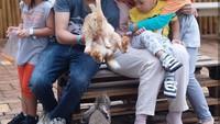 <p>Si sulung Bhumi udah gede banget ya. Kakak Bhumi yang pegang kelinci, adik-adik hanya melihat saja. (Foto: Instagram Zaskia Mecca)</p>