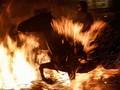 FOTO: Kuda-kuda Penantang Lidah Api