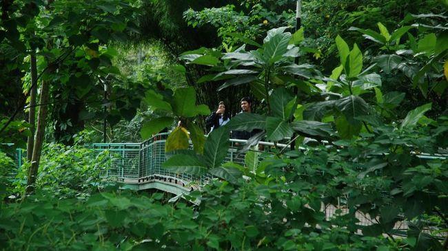 Wali Kota Bandung Ridwan Kamil mengatakan kalau segala kegiatan bisa dilakukan di Forest Walk, mulai dari jogging sampai selfie.