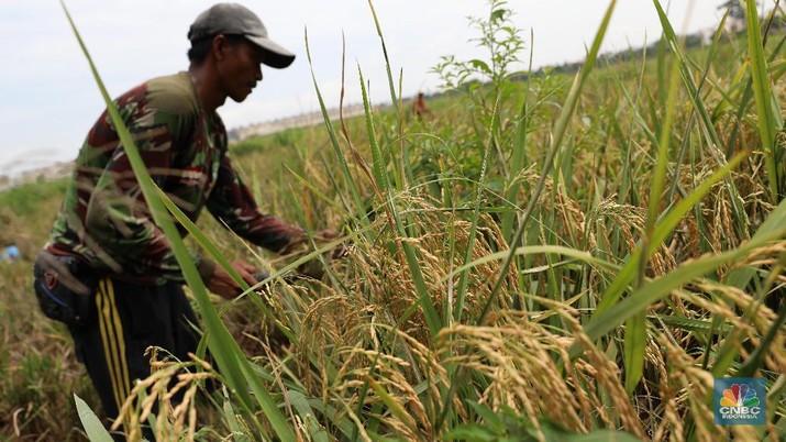 Sektor Pertanian Butuh Investasi