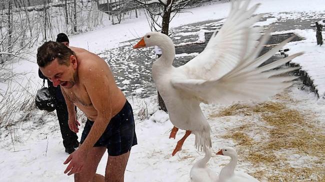 Pada foto-foto unik pilihan CNNIndonesia.com pekan ini, ada dansa dari kawanan burung starling dan patukan seekor angsa di danau air es di Kiev, Ukraina.