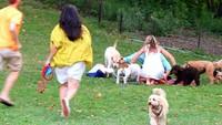 <div>Ketika makanan ludes diserbu para anjing peliharaan ( Foto: Instagram @newyorkpippa)</div>