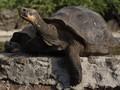 Galapagos Ingin Jadikan TN Komodo 'Saudaranya'
