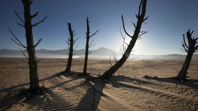 Serangga hingga tanaman seperti daun kaktus menjadi makanan sehari-hari warga di selatan Madagaskar yang bertahan di tengah kekeringan.