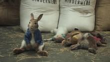 Sutradara Buka Peluang Kembangkan Peter Rabbit Universe