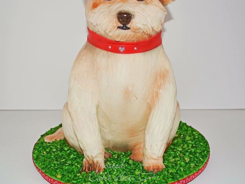 Duh, kue anjing jenis terrier ini punya badan yang gemuk cenderung bantat. Mukanya terlihat tegang, ya! Foto: Instagram