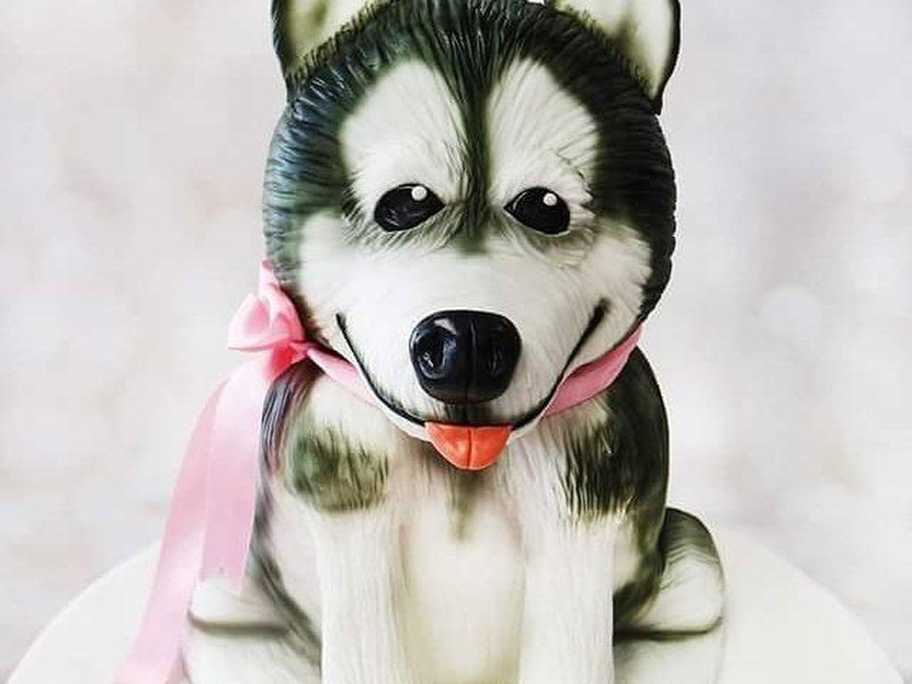 Kalau nonton film Hachiko pasti tau jenis anjing yang satu ini. Kue ini seperti editan foto, ya. Foto: Instagram