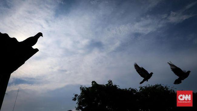 Seekor burung merpati yang berhasll hijrah dari AS terpaksa harus akan dibunuh karena beresiko bawa penyakit ke Australia.