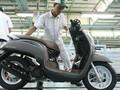 Honda Scoopy Cuma Ganti Warna