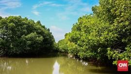 Bank Dunia Sumbang Rp5,58 T ke RI untuk Pemulihan Mangrove