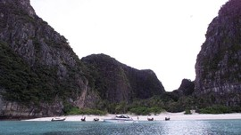 Turis Menghilang, Hiu Karang Kembali Mendatangi Maya Bay