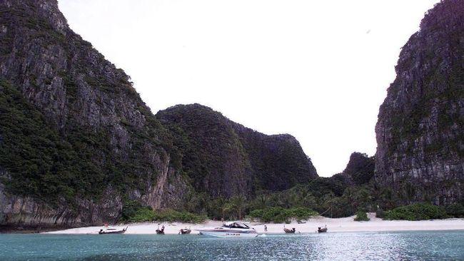 Sebelum ditutup dan masih diserbu turis, kawanan hiu karang enggan mendekati Pantai Maya Bay.