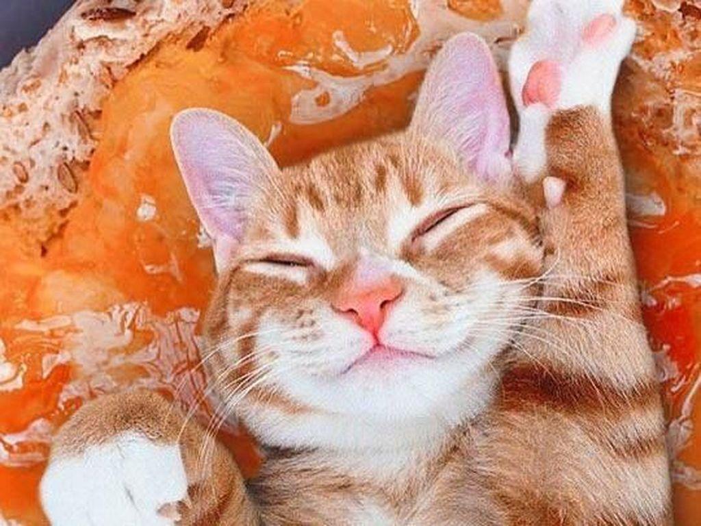 Mengintip Lucunya 10 Ekspresi Kucing dalam Makanan, Penasaran?