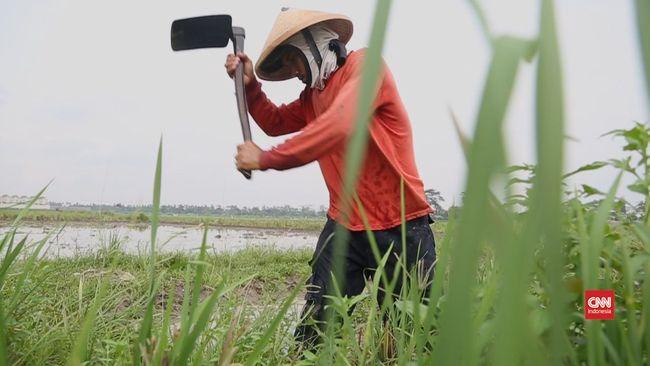 Jumlah Petani Berkurang Tingkat Pengangguran Di Desa Naik