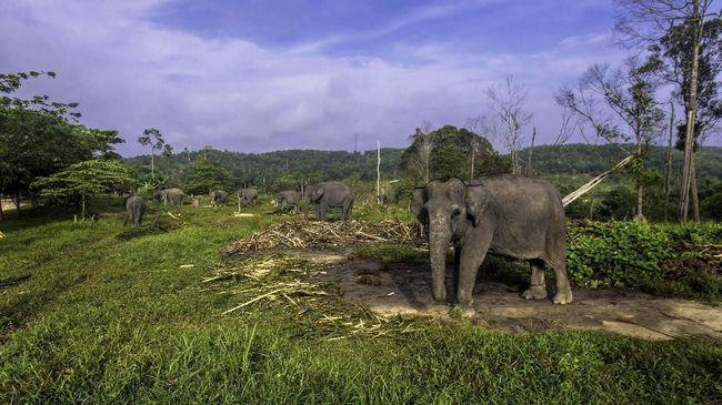 Kabar duka datang dari Riau. Seekor gajah sumatera ditemukan mati awal pekan ini, diduga menjadi korban pembunuhan dan perburuan gading.