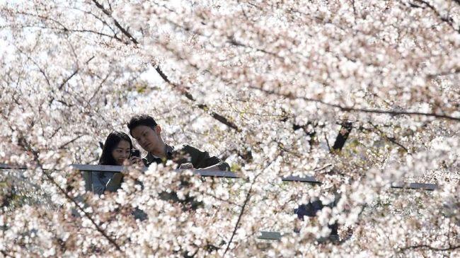 Bagi yang berencana mengikuti jejak Syahrini dan Reino untuk menikah di Tokyo, berikut sejumlah lokasi foto pranikah yang bisa dipilih sesuai tema.