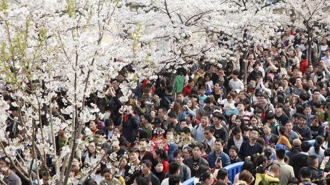 Sebelum memesan akomodasi dengan harga terlalu mahal atau berdesakan dengan jutaan turis, berikut ini panduan musim berkunjung ke Jepang.