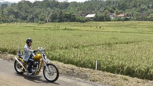 Motor Chopper Hilang di LHKPN, Jokowi Alihkan ke Kaesang