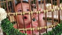 <p>Begini ekspresi Solara saat masuk ke kandang ayam. (Foto: Instagram/ @mamiehardo) </p>