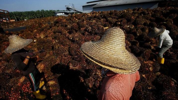 Mahkota Group Ekspansi Produksi Minyak Goreng