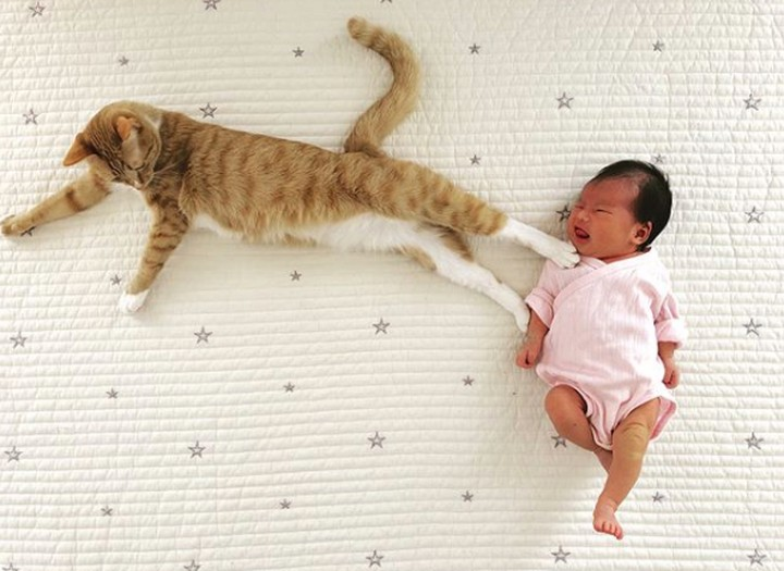 Aduh, mau marah tapi nggak bisa karena melihat tingkah kucing perliharaan yang satu ini. Jahil tapi menggemaskan.