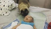 <p>Diendus-endus saat tidur, mungkin kalau masih bayi nggak terasa ya, Bun? (Foto: Instagram @nothrboundzz)</p>