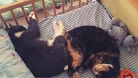 <p>Harap maklum, kucing memang mencari tempat yang paling nyaman untuk beristirahat. Jadinya gini deh, tempat tidur si kecil dikuasai kucingnya. (Foto: Instagram @ieva_salda)</p>