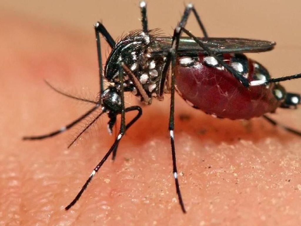 5 Fakta Unik Tentang Nyamuk yang Belum Kamu Ketahui (1)