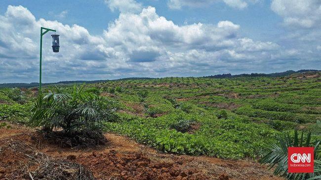 Organisasi independen Tuk Indonesia menyebut tanah kosong (landbank) seluas 3,3 juta hektare (ha) di Kalimantan dikuasai oleh 25 konglomerat kelapa sawit.