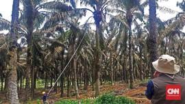 Setelah Vila, KPK Sita Kebun Kelapa Sawit Nurhadi di Sumut