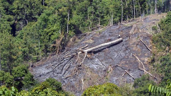 Seorang warga berada di kawasan hutan yang baru dibakar untuk pembukaan lahan baru, di Sei Pisang, Bungus, Padang, Sumatera Barat, Senin (19/3). Pembabatan kawasan hutan di daerah itu dilakukan warga untuk membuka lahan baru serta memanfaatkan kayu hasil penebangan. ANTARA FOTO/Iggoy el Fitra/foc/18.