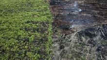 KLHK Kurangi Luas Hutan Terlarang bagi Konsesi 42.911 Hektare