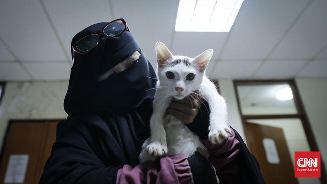 Cinta Ibu Asuh Untuk 100 Kucing Di Rumahnya