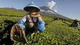 PTPN III, Holding BUMN Perkebunan Buka Lowongan Kerja