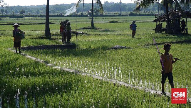 BPS menyebut luas lahan pertanian makin hari makin menurun. Pada 2018 ini, lahan tinggal  7,1 juta hektare, turun dari 2017 yang 7,75 juta.