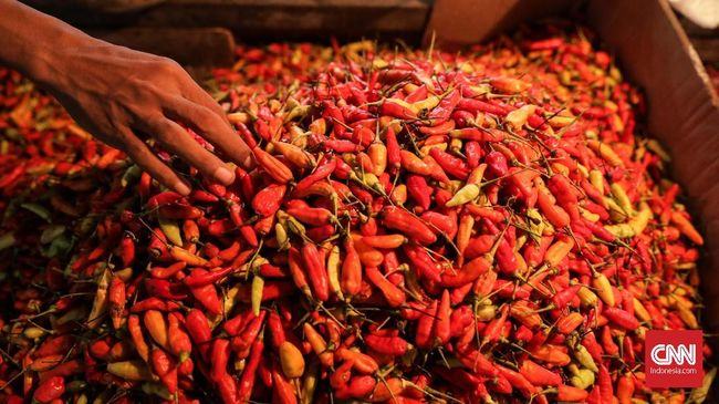 Rata-rata harga jual cabai rawit merah naik 7,4 persen menjadi Rp69.050 per kg pada perdagangan Senin (14/10).