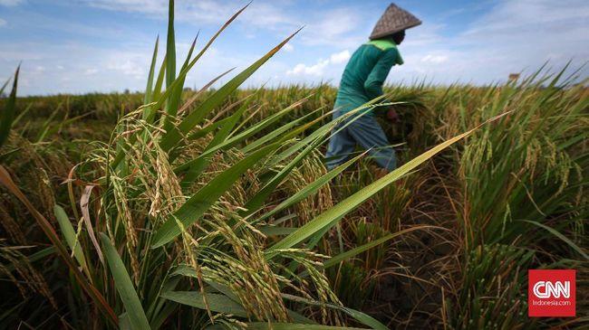 Petani memanen padi di areal persawahan Rorotan, Jakarta Utara, Kamis, 24 Mei 2018. Pemerintah telah menjalankan program untuk memperbanyak cetak sawah baru, dalam dua tahun belakangan ini. CNNIndonesia/Safir Makki