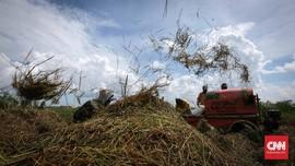 Faisal Basri Pertanyakan Proyek Lumbung Pangan Jokowi