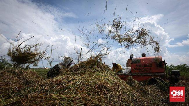 Ekonom Senior Faisal Basri mengkritik penujukkan Menteri Pertahanan Prabowo Subianto sebagai 'komandan' proyek lumbung pangan di Kalimantan Tengah.