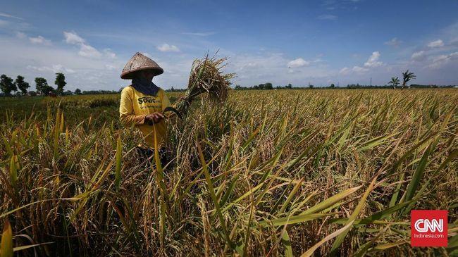 Jokowi sedang berupaya menciptakan ketahanan pangan di dalam negeri melalui proyek food estate. Namun, akademisi mengingatkan soal risiko kegagalan proyek itu.