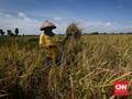 Food Estate, Jalan Jokowi Kenyangkan Rakyat Indonesia