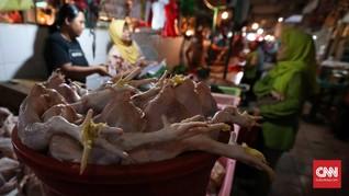 Harga Daging Ayam Menanjak 8,4 Persen Sepanjang Pekan Lalu