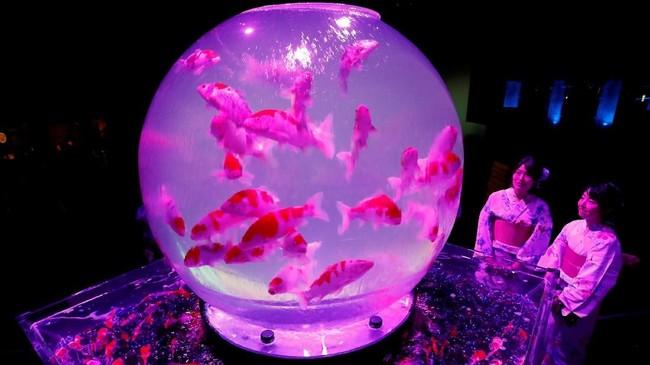Seni tak melulu hanya melibatkan manusia. Di pameran Art Aquarium 2018 di Jepang, delapan ribu ikan menari diiringi pencahayaan dan efek berwarna-warni.