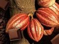 Sejarah Hari Cokelat Dunia, dari Alat Tukar ke Kuliner